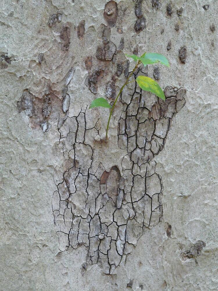 Bark by edward turnbull