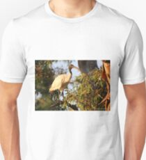 Australian White Ibis (3327) T-Shirt