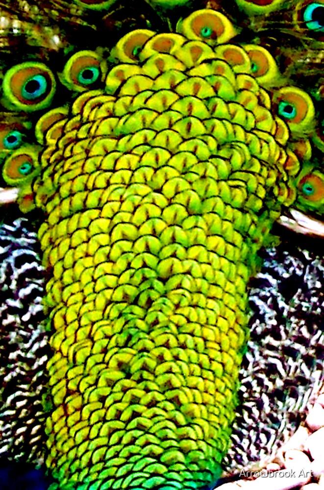 Peacock Feathers - Hannah B by John Brotheridge