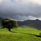 A lone tree at the back of Skiddaw by peteton