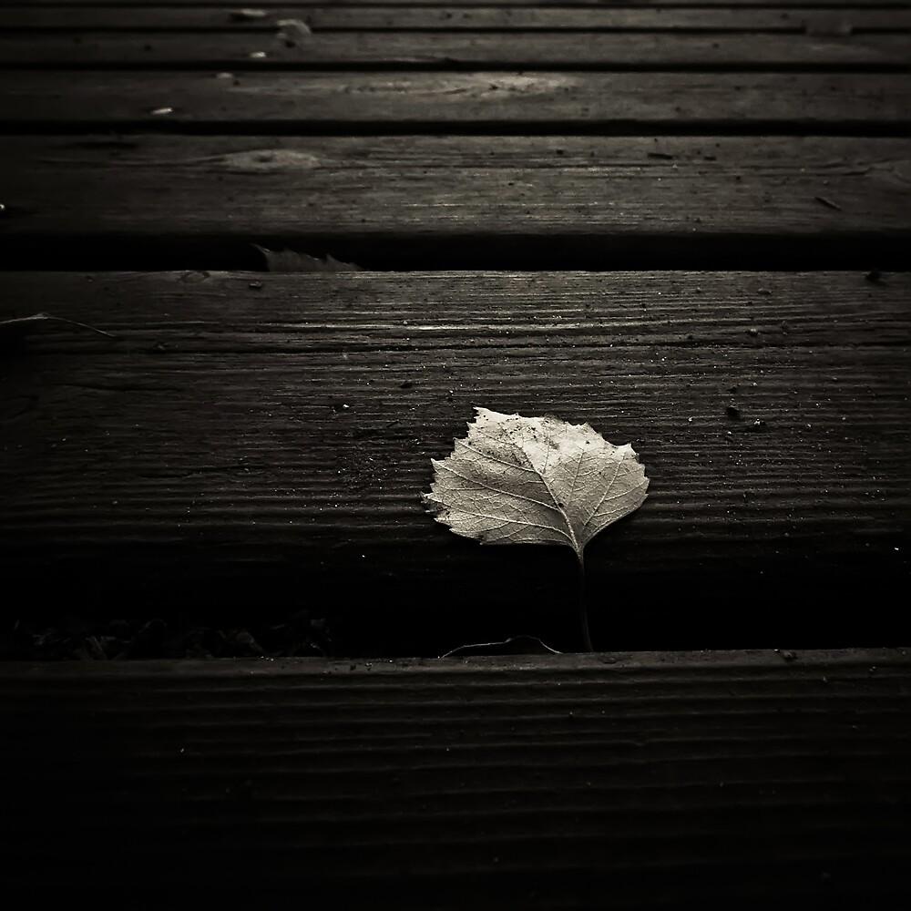 Fallen by Mikael Raymond