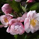 Crabapple Flowers Attract Bees by Joy Watson