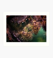 Jumping Spider Macro Art Print