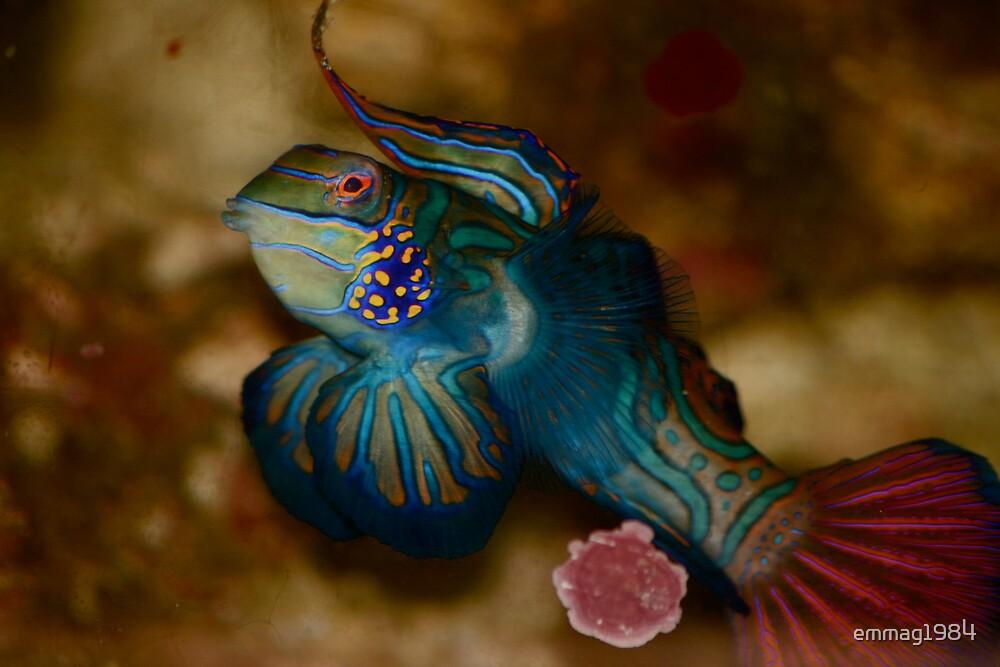 Aquarium moment by emmag1984