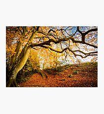 Autumns Golden Colours Photographic Print