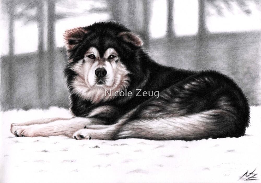Alaskan Malamute Dog Portrait by Nicole Zeug