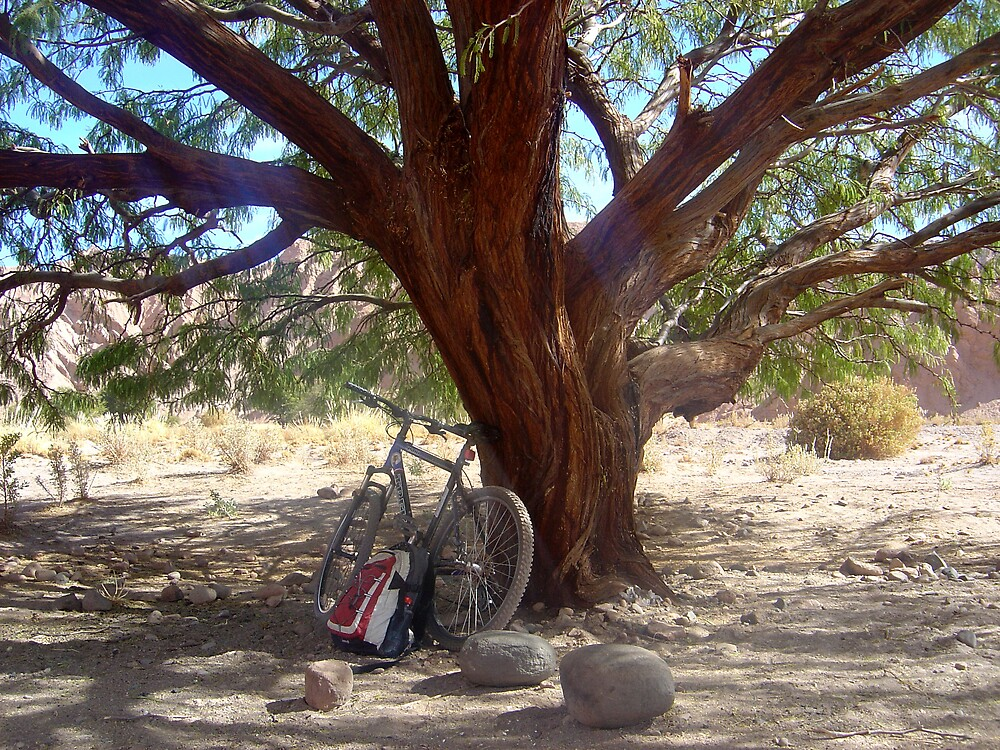 Bike resting under the shade by mojgan