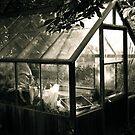 """The Greenhouse""  by Bradley Shawn  Rabon"