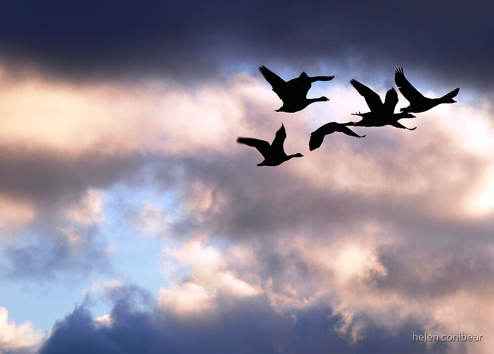 birds by helen conibear