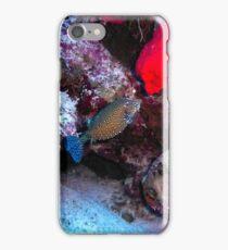 Pesce scatola iPhone Case/Skin