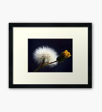 ©NS Seeds For Spring IA Framed Print