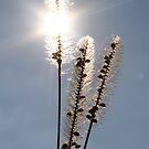 Grass Head in the Sun by Pamela Jayne Smith