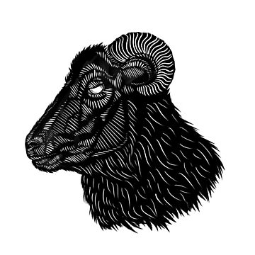 Black Ram by BovaArt