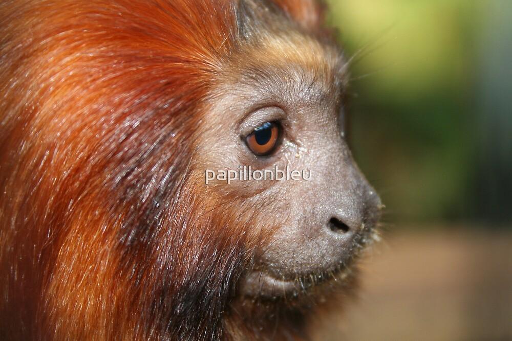 Little Monkey by Pamela Jayne Smith
