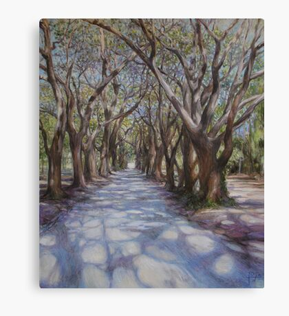 Avenue of the Oaks Canvas Print