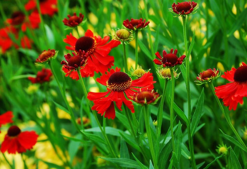 Flowers galore!!! by Niamhas