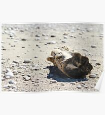 Driftwood on a Lonely Beach Poster
