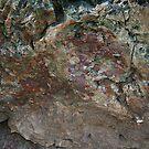 Petrified Wood by Anne-Marie Bokslag