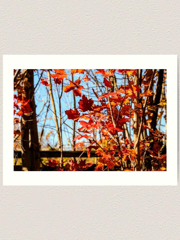 Alternate view of Autumn Joy Art Print