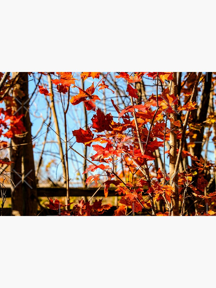 Autumn Joy by debfaraday