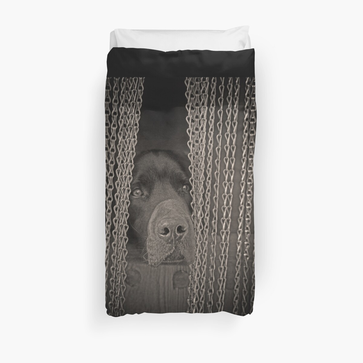 «Labrador» de SpainBuddy
