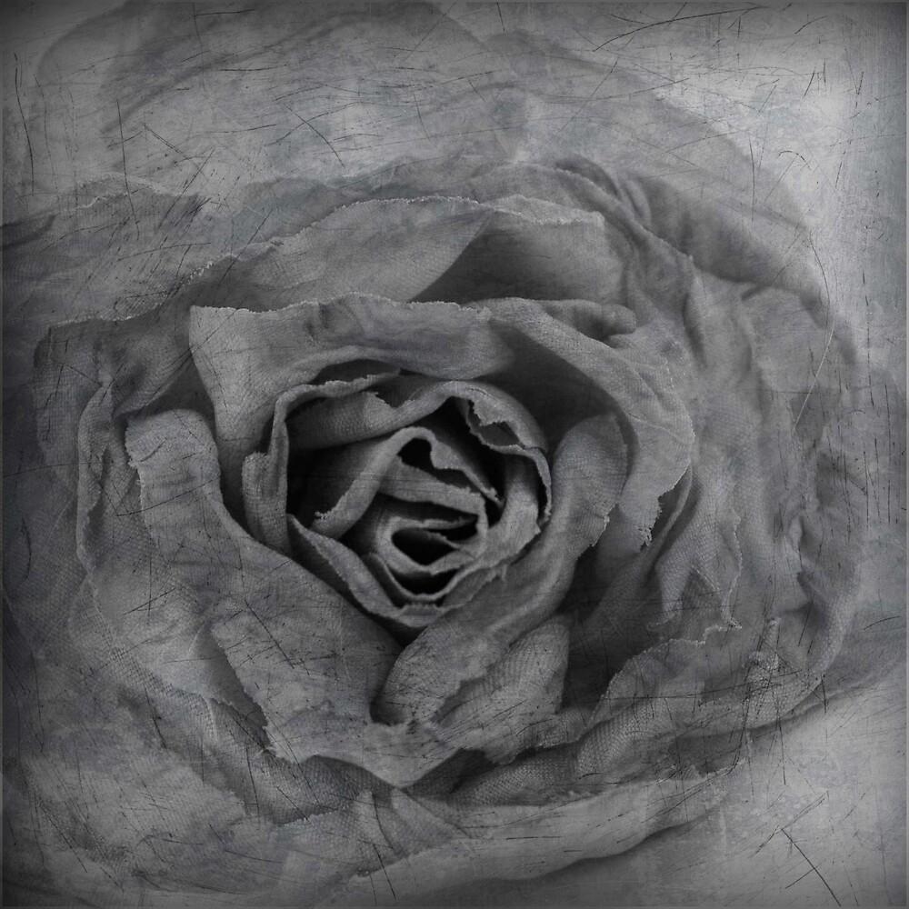 Rose Black & White by Robert Baker
