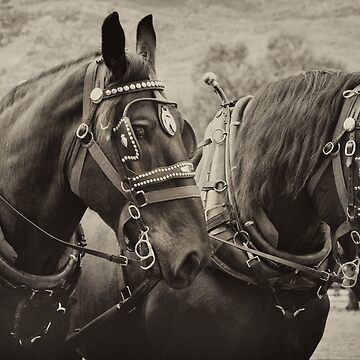 PERCHERON BLACK BEAUTIES by TheresaTahara