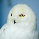 Snow Owl by Jeff Palm Photography