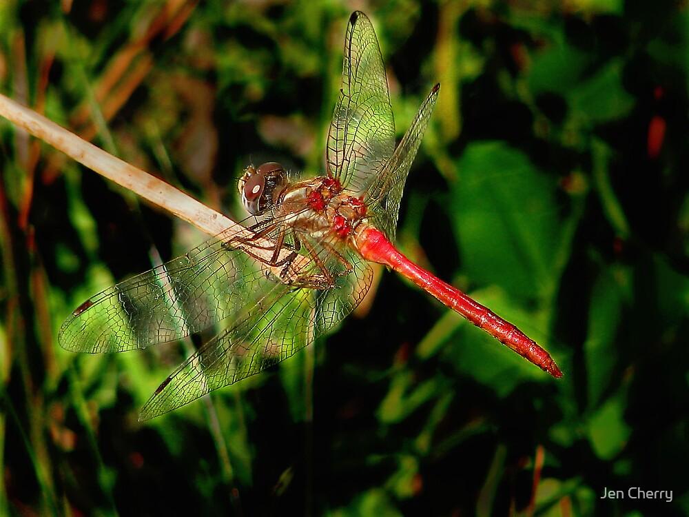 Scarlett Dragonfly Dreams by Jen Millard