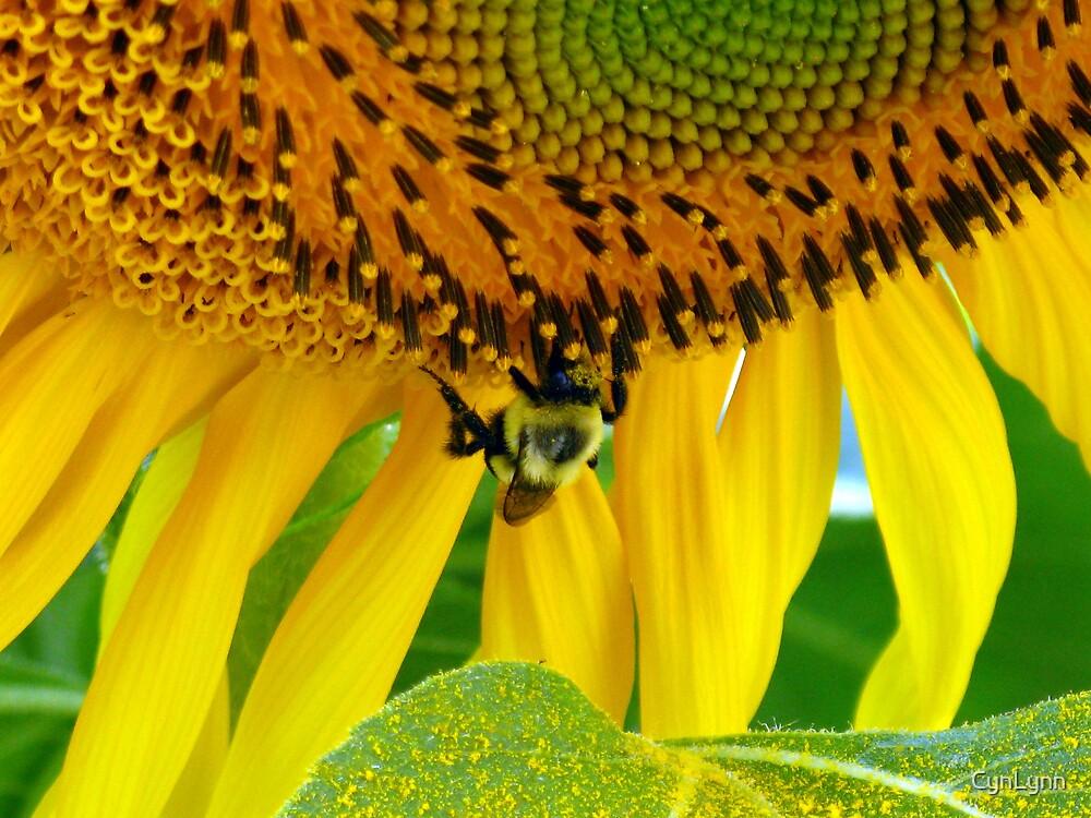 Pollen by CynLynn