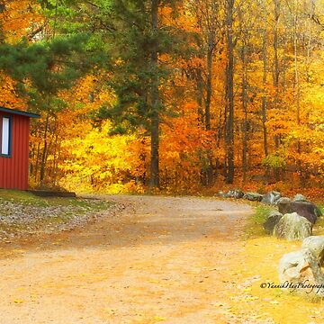 The Red Shed by Photograph2u