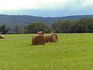 Hay Rolls by FrankieCat