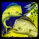 Mahi Mahi on blue & yellow by David Pearce