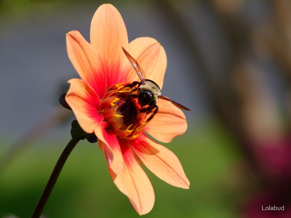 Bee-Cause I Like It by Lolabud