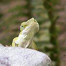 Curious Lizard by Marcella Babineaux
