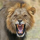 Angry Lion by Anthony Goldman