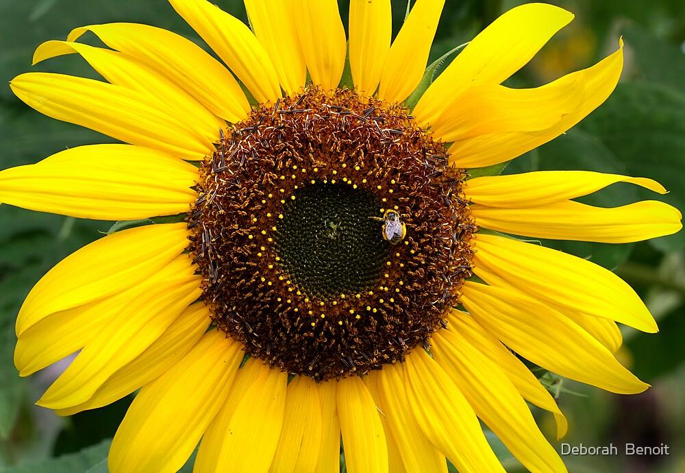 Sunflower Gold by Deborah  Benoit