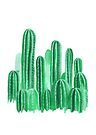 Cacti Garden by makemerriness