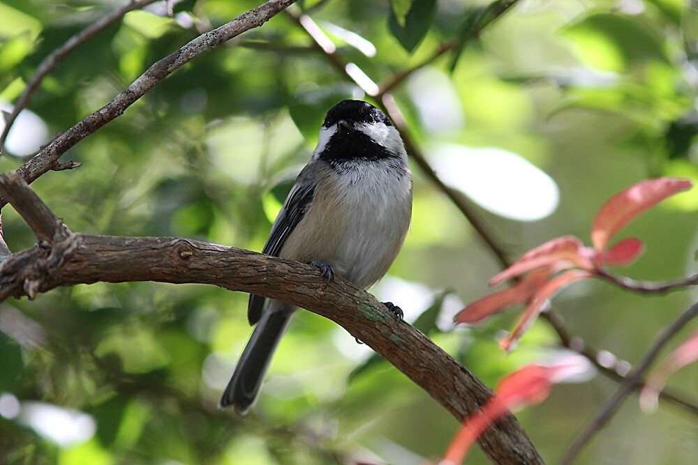 Chickadee in the forest in early autumn by Linda Crockett