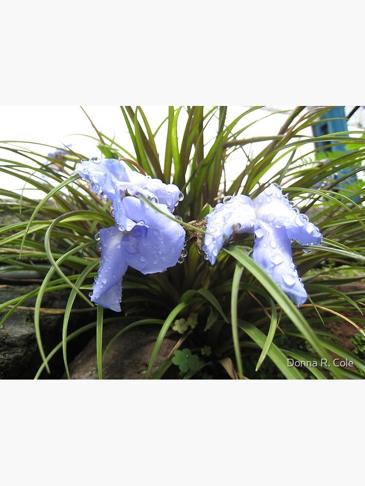 Wet Blue by alwaysdrc