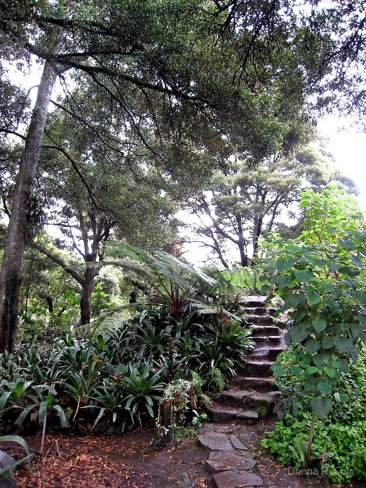 Up the Garden Steps by Donna R. Cole