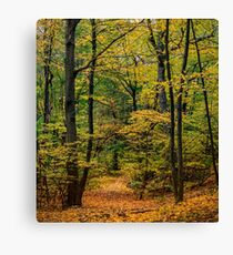 October Forest 3 Canvas Print