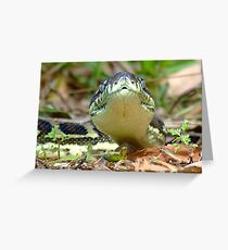 Python-Front on Greeting Card