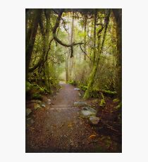 Enchanted Forest, Cradle Mountain, Tasmania #3 Photographic Print