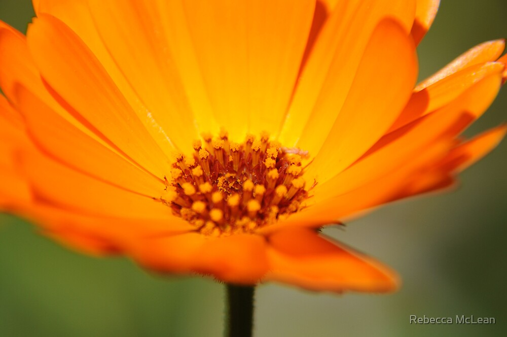 Orange Delight by Rebecca McLean