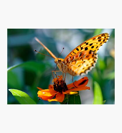 Butterfly in Aoyama, Tokyo, Japan Photographic Print
