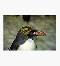 Profile of a Penguin Photographic Print
