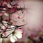 Under the Dogwood Tree by Cloudlingpics