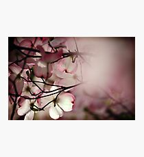 Underneath the Magnolia Tree Photographic Print