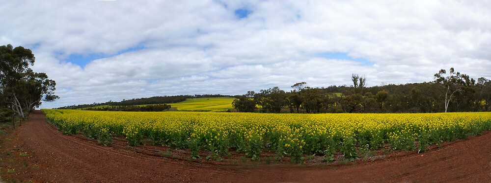 Canola fields by georgieboy98